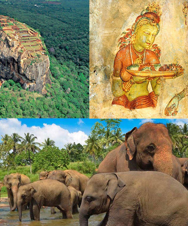 世界遺産シーギリヤロック 象の孤児院での触れ合い日帰りツアー