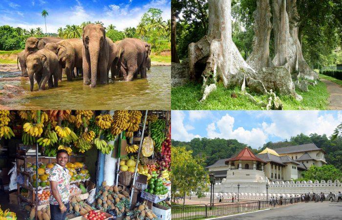 キャンディマーケット 仏歯寺 ペーラーデニヤ植物園 象の孤児院 日帰り ツアー