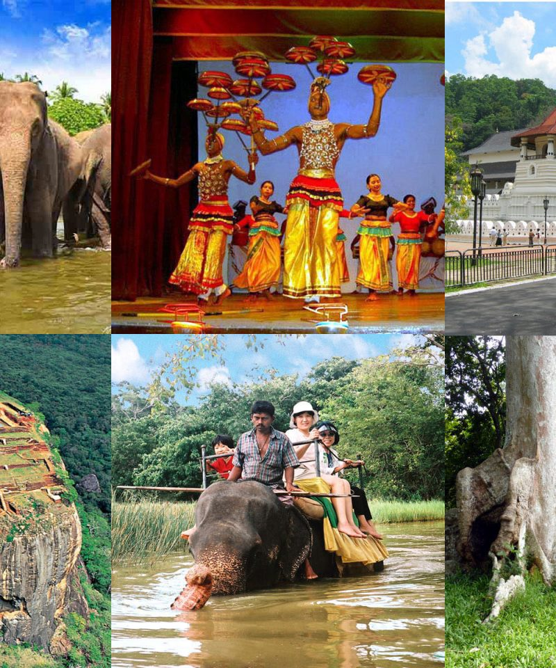 キャンディ市内観光 植物園 シーギリヤロック 象の孤児院 1泊ツアー