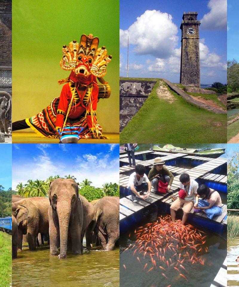 4つの 世界遺産 高原列車 象乗り体験 ヌワラエリア 象の孤児院 6泊ツアー
