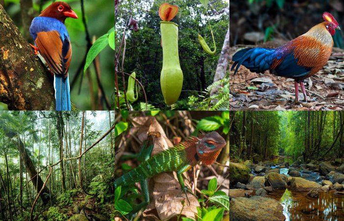 シンハラ-ジャ森林保護区を散策する日帰りツアー