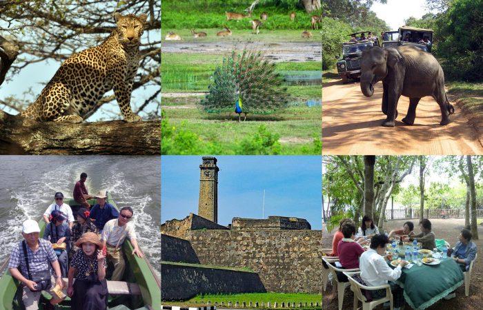 ヤーラ国立公園ジープサファリ マングローブの中の動物と出会えるボートサファリ 世界遺産ゴールフォート 観光1泊ツアー